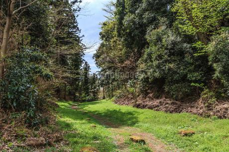 春の箕輪城の風景の写真素材 [FYI01263183]