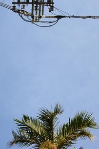 晴天の青空と南国のヤシの木と電柱の写真素材 [FYI01263242]