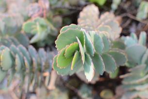 多肉植物の集合の写真素材 [FYI01263248]