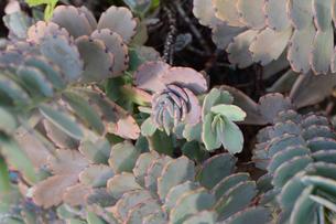 多肉植物の集合の写真素材 [FYI01263258]
