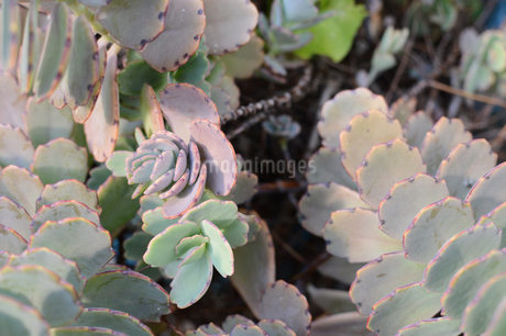 多肉植物の集合の写真素材 [FYI01263264]