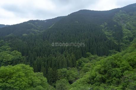 新緑の山並みの写真素材 [FYI01263320]