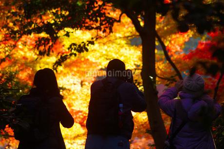 紅葉を撮る人々の写真素材 [FYI01263616]