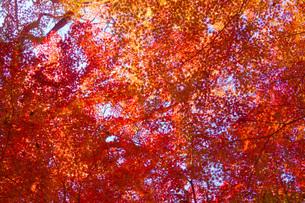 紅葉イメージの写真素材 [FYI01263628]