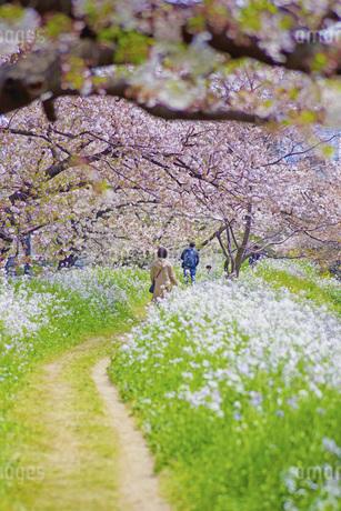春の小道のイメージの写真素材 [FYI01263633]