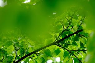 雨粒が付いた葉の写真素材 [FYI01263708]
