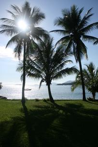 リオ州アラウージョ島に茂るヤシの木の写真素材 [FYI01263881]