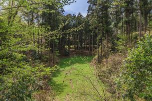 春の箕輪城の風景の写真素材 [FYI01263892]