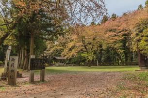 春の箕輪城の御前曲輪の風景の写真素材 [FYI01263897]
