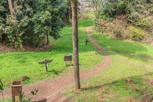 春の箕輪城の風景の写真素材 [FYI01263902]