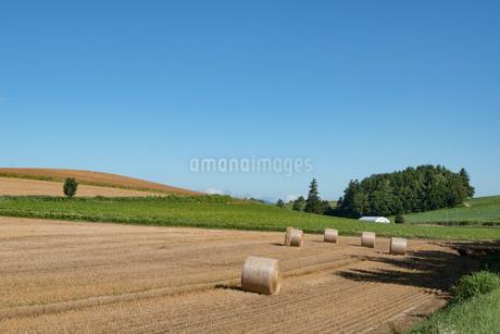 収穫が終わった麦畑とムギロール 北海道の写真素材 [FYI01263903]