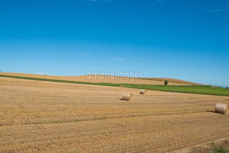 収穫が終わった麦畑とムギロール 北海道の写真素材 [FYI01263904]