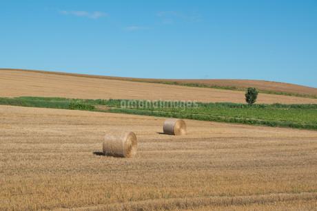 収穫が終わった麦畑とムギロール 北海道の写真素材 [FYI01263905]