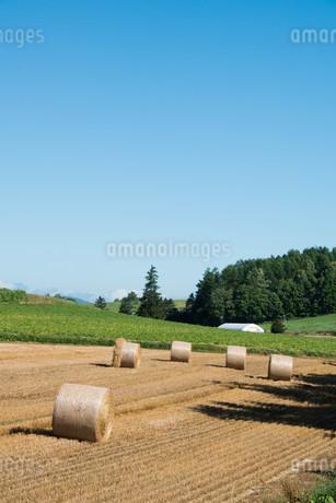 収穫が終わった麦畑とムギロール 北海道の写真素材 [FYI01263906]