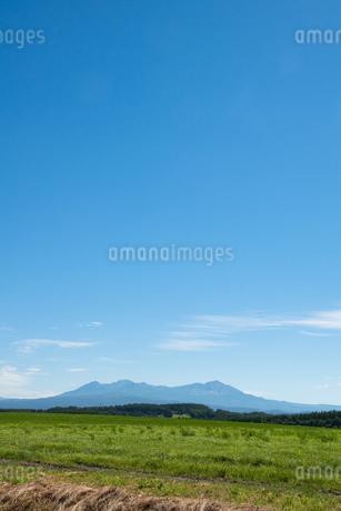 緑の牧草畑と夏の山並み 大雪山の写真素材 [FYI01263908]