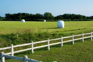 緑の牧草畑と梱包された牧草ロールの写真素材 [FYI01263927]