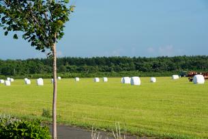 緑の牧草畑と梱包された牧草ロールの写真素材 [FYI01263928]