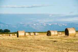 収穫が終わった麦畑とムギロール 北海道の写真素材 [FYI01263929]