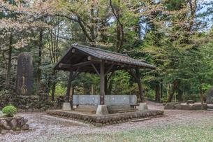 春の箕輪城の御前曲輪の風景の写真素材 [FYI01263938]