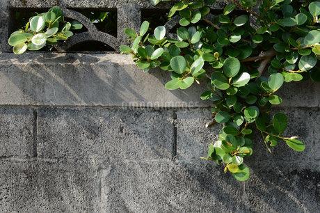 コンクリートブロックの壁に沿う南国の植物の写真素材 [FYI01263939]