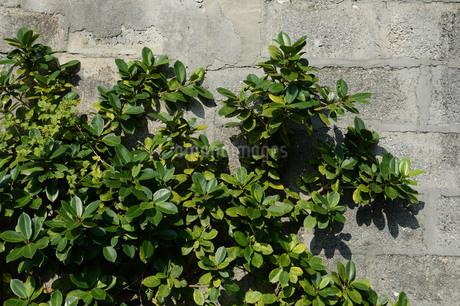 コンクリートブロックの壁に沿う南国の植物の写真素材 [FYI01263947]