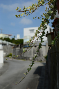 裏通りに垂れるツル植物の写真素材 [FYI01263951]