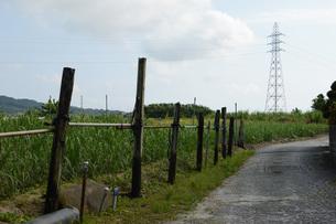 送電塔が見える田舎の畑道の写真素材 [FYI01263953]