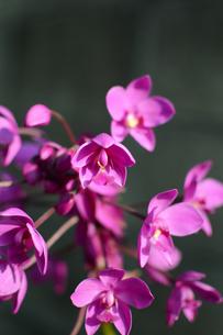 寄り集まって咲く紫の花の写真素材 [FYI01263975]
