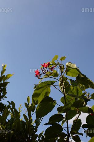 青空に伸びる赤い花の写真素材 [FYI01263977]