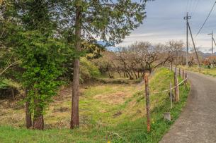 春の箕輪城の風景の写真素材 [FYI01263986]