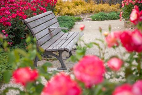 公園のベンチの写真素材 [FYI01264038]