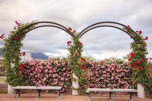 公園のベンチの写真素材 [FYI01264041]