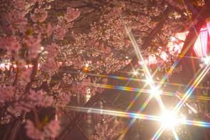目黒川の桜イメージの写真素材 [FYI01264159]