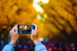 スマートフォン越しの銀杏の写真素材 [FYI01264190]