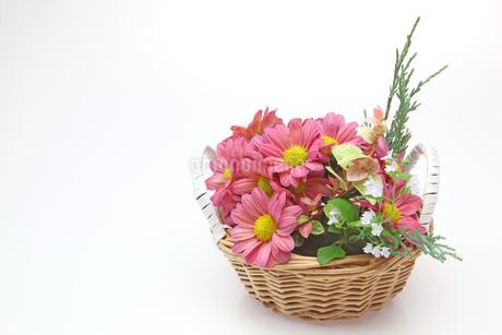カゴに挿した菊の写真素材 [FYI01264454]