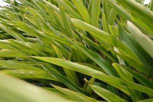 南国の植物の写真素材 [FYI01264661]