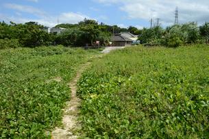 集落に伸びる細い道の写真素材 [FYI01264677]