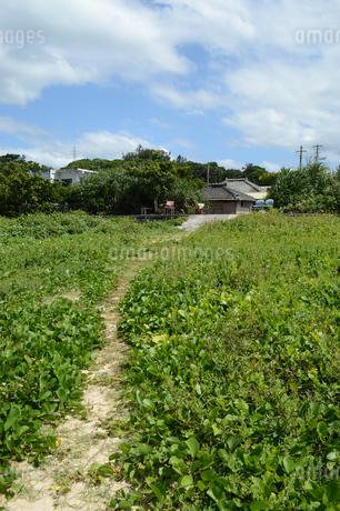 集落に伸びる細い道の写真素材 [FYI01264678]