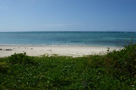 植物が生える砂浜とエメラルドグリーンの海と青空の写真素材 [FYI01264681]