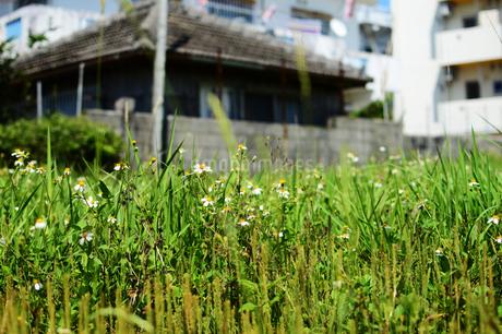 奥に古民家の見える空き地の草花の写真素材 [FYI01264747]