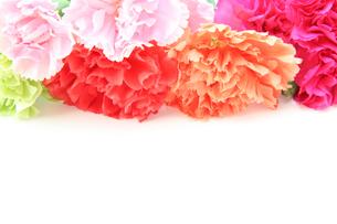 カーネーションの花束の写真素材 [FYI01264766]