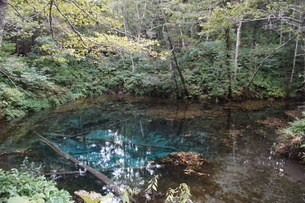 阿寒摩周国定公園 神の子池の写真素材 [FYI01264778]