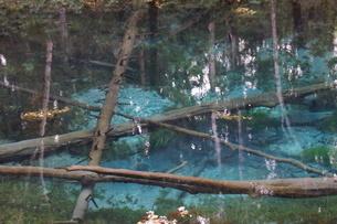 阿寒摩周国定公園 神の子池の写真素材 [FYI01264779]