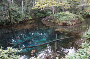 阿寒摩周国定公園 神の子池の写真素材 [FYI01264780]