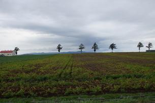 女満別の風景(メルヘンの森)の写真素材 [FYI01264806]