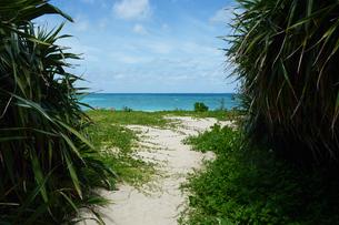 南国の植物とエメラルドグリーンの海の写真素材 [FYI01264807]