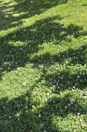 木の影が投影された野原の草花の写真素材 [FYI01264813]