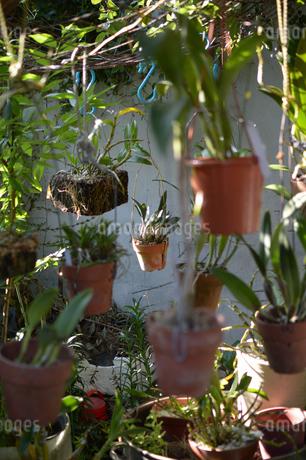植木鉢がたくさん吊るされているの写真素材 [FYI01264946]