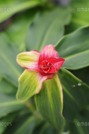 小さく可愛い花が一輪咲いているの写真素材 [FYI01264960]
