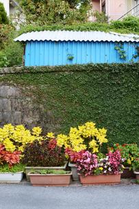 青いトタンの壁と路上の植木鉢の写真素材 [FYI01264964]